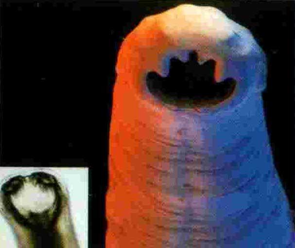 сироп от глистов детский